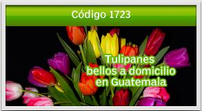 envio de tulipanes a muxbal
