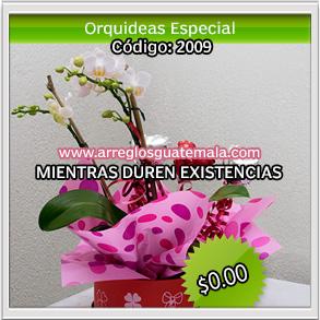 flores para 14 de febrero opcion 2209