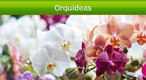 arreglos de orquideas