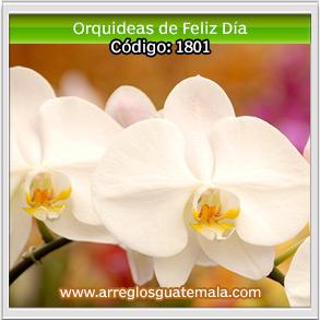 orquideas en guatemala para regalar