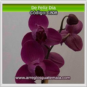 regalar orquideas en guatemala para desear un bonito dia