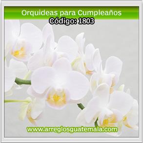 orquideas en guatemala para cumpleaños