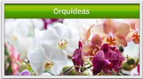 arreglos de orquideas en guatemala