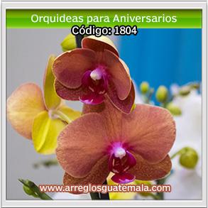 orquideas en guatemala para aniversarios