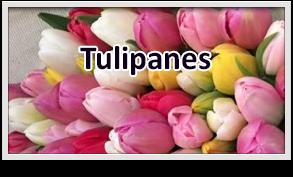 arreglos de tulipanes en guatemala