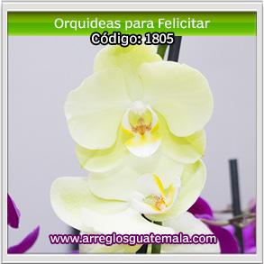 orquideas en guatemala para felicitar