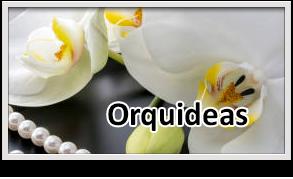 regalar orquideas guatemala