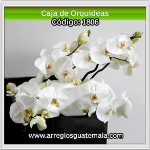 comprar orquideas para enviar a domicilio en guatemala