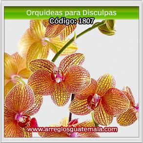 orquideas en guatemala para enviar disculpas