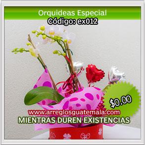 flores bellas en guatemala a domicilio
